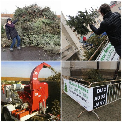 Collage collecte sapins 2019.jpg